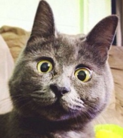 surprised-cat-hydrocephalus-kevin-theadventuresofkev23