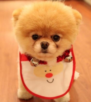 Cute-Little-Dog-1024x640
