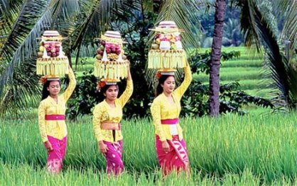 balinese_MOS_428x269_to_468x312