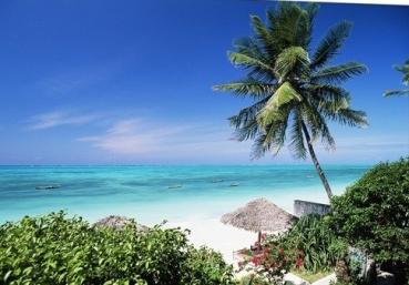 view-through-palm-trees-towards-beach-and-indian-ocean-zanzibar-tanzania-africa,2204967 (1)